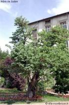 Les arbres ne cachent pas le jardin