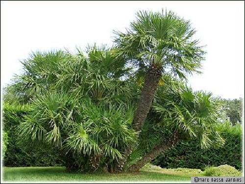 Un arbre une d coration durable - Petit arbre decoratif ...