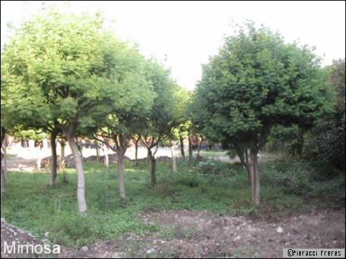 Un arbre, une décoration durable - Travaux.com