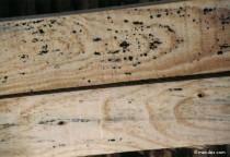 Mousses, moisissures et champignons (mérule)