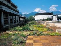 Toiture végétalisée : une solution adaptée aux commerces et immeubles de bureaux
