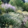 Le Jardin sec: un jardin économe en eau