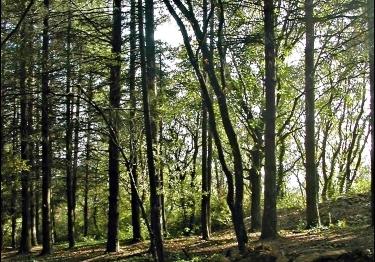 Construction Bois: Pas assez de matière première dans les forêts françaises?