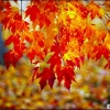 Hiver rigoureux à Dijon : les bons gestes pour préparer votre jardin à un sommeil hivernal bénéfique