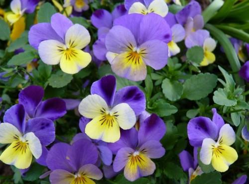 Comment entretenir son jardin en automne ? | Travaux.com