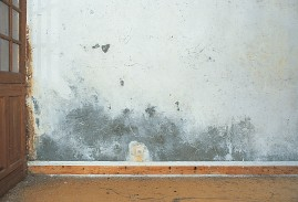 Moisissure sur murs DIP Etanch