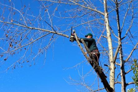 Élaguer ses arbres © Public Domain