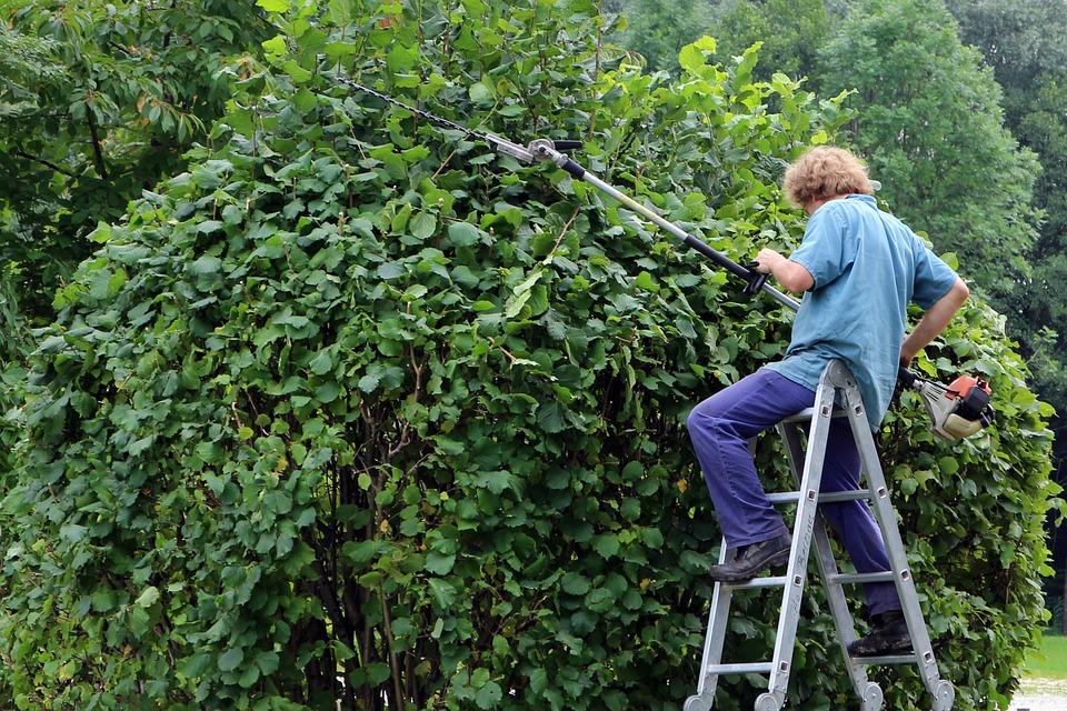 Entretien de jardin : élagage
