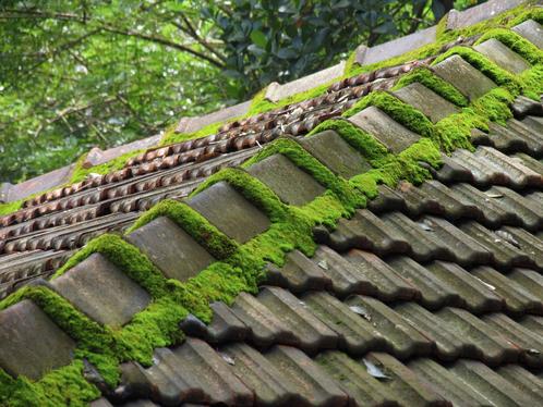 Démoussage de toiture : pour un toit en bon état !