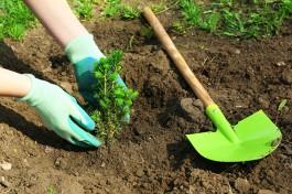 Planter une haie : préparer la terre